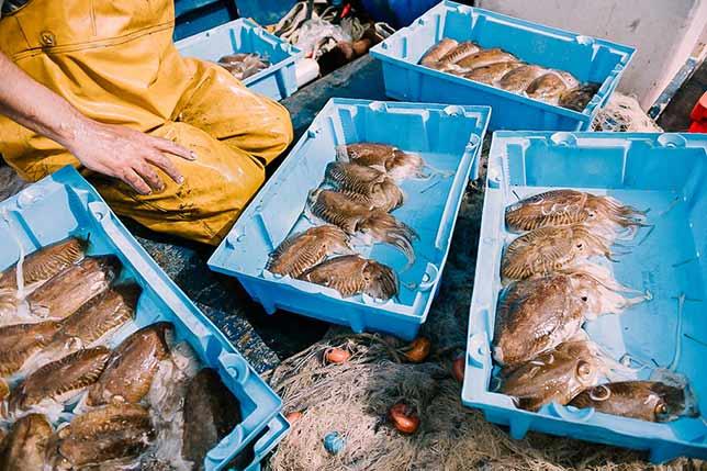 Get to know the last artisanal fishermen near Barcelona