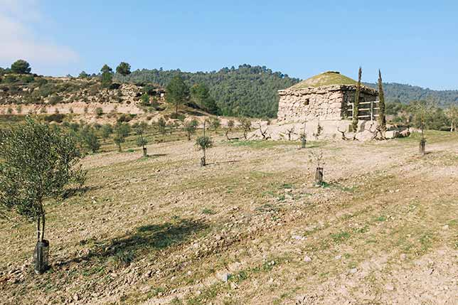 Central Catalonia is a good region to grow olive oil trees