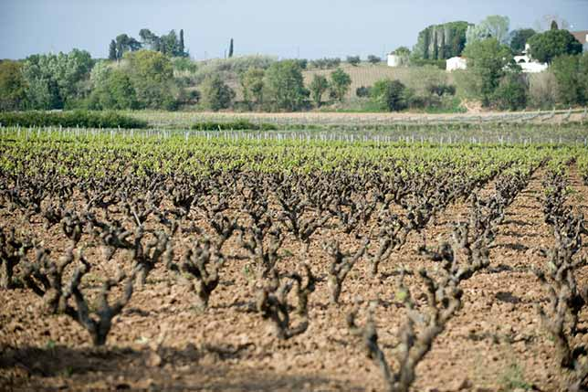 A day tour to visit family owned wineries around in Catalonia